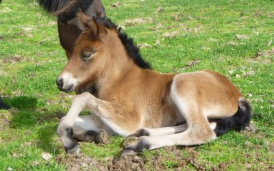 Welcome Little Foals!