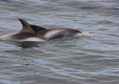 Seepferdchen 4