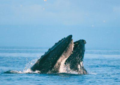 Seepferdchen 8